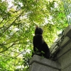 クロネコ祐希の見張り番   シマトネリコの木漏れ日の中で