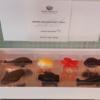 ピエールマッコリーニのハワイ限定チョコレート、今年もハワイフェアで買えるといいな。