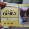 猫ちゃー JALペットファミリー会員証ゲット