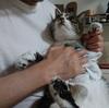 猫にシャンプーできないときは蒸しタオルもおすすめ