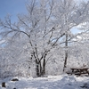 <山行記録> 千歳山 ~今冬初の雪山登山~ 2018.12.15
