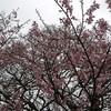 岡山県真庭市の神庭の滝と備中鐘乳穴と醍醐桜に行ってきた:岡山県北観光