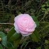 桜井の聖林寺で塗香づくり。 フェノロサ、白洲正子も魅了された十一面観音を観ました (^_^)/