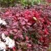 「ひろば」の落ち葉も、氷雨に濡れて…