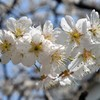 春の花々を撮影した