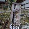 松尾大社の椋の霊樹。