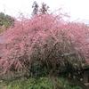 早春の「まつこの庭」