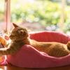 【獣医師に聞いた!】夫の猫アレルギーが治った理由を考察