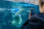 快晴の旭山動物園で、ホッキョクグマやレッサーパンダをじっくり観察!