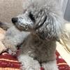 2020年5月15日 えるぞう(犬)の通院記録 ~腸リンパ管拡張症(IBD)と慢性腎不全