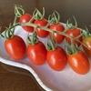 盛夏には赤いトマトがよく似合う