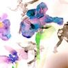 氷上の菖蒲の花ー太田由希奈