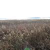 印旛沼 - かつて日本ワースト1の水質だった日本最大級の沼 | オススメ観察スポット