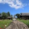 奈良県「般若寺」コスモス 2020