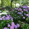 滋賀県もりやま芦刈園「あじさい」。草津市立水生植物公園みずの森「スイレン」。