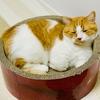 仕事部屋のひんやり猫鍋の代わりに、ガリガリサークルを配置。