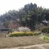 倶利伽羅山MTB