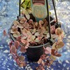 🌵多肉植物  秋の植え替え作業㊺最終回🌵