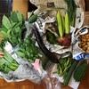 """食欲の秋に""""旬を味わう""""。無農薬野菜でたっぷりと栄養を摂ります❤︎"""