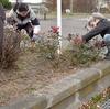 バラのワークショップしました:地域に合ったお庭つくりをしよう