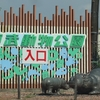 暑い中、動物の写真を撮りに東武動物公園に!ハゲタカの頭はなぜはげたか?