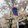 スカスカ京都の春(1)疎水周辺