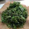 山椒の葉の佃煮をつくります