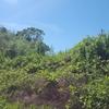 ジャングルがこんなに綺麗になりました!