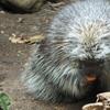 バイオドームで出会った生き物(その2:メープルの森)