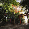 今年も京都へ行ってきました