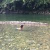 和歌山の川湯温泉 朝から快晴です。1泊してよかった!