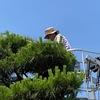 梅雨の季節の風物詩 庭木の剪定