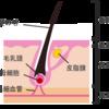 【毛髪の基礎知識】毛髪の基本と構造、毛髪補修成分まとめ