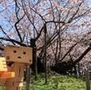 松前町 松前の桜の名木、光善寺の血脈桜