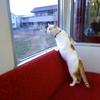 猫と会える鉄道 池本康弘