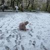 こっそり雪遊び 外出自粛要請