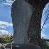 時代の流れと人々の流れを見守った 千代之松跡と石碑たち(小田原市)