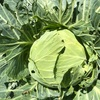 """畑からこんにちは!😆 210609   """"夏野菜の収穫が始まりました!☝️😆🥒"""""""