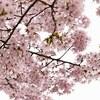 今週の紀行は京都府京都市(醍醐寺)