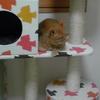 猫タワーと猫ステップ