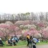 梅林公園でお花見&ビルより高い鯉のぼり!