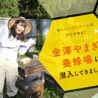 金沢はちみつの美味しさの秘密に迫る!やまぎし養蜂場に潜入してきました!【PR】