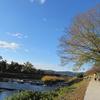 マスクをはずし、糺の森で深呼吸  京都の旅 by Goto 2020.11.24-27 Ara-kanふたり旅 1日目〔後編〕 糺の森で夢心地さんぽ