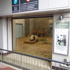 GW6日目 上野動物園