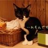 ★保護猫紹介★れもんくん★
