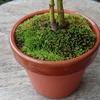 いい色の苔が生えてきた