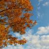 「晩秋」から「初冬」へ。