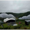 世界で最も大きい温室のひとつがイギリスに!エデン・プロジェクトに行ってきました【Eden Project】