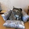 手作り100均クッション猫ベッドのその後・・・!