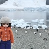 南極旅行19 氷河の丘のニコハーバーに上陸、ついにリカちゃんが南極到達